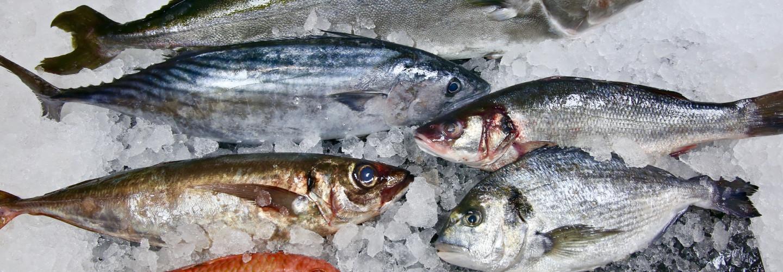 Våra fiskare