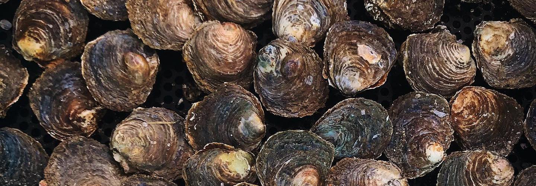 Orust shellfish